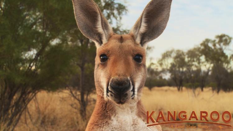 Cinemas | Kangaroo The Movie